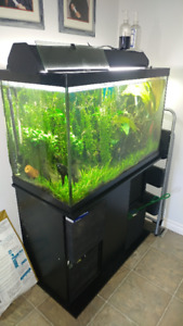 aquarium 65gallons  350negociable