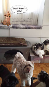 SINCE 2010 SLEEPOVERS/PLAYDATES FOR SMALL DOGS West Island Greater Montréal image 1