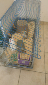 FREE 2 guniea pigs with cage and accessories