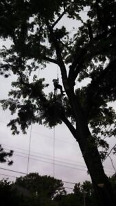 Tree removal, tree services, pruning, storm damage clean up