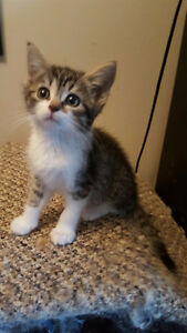 Adorable Kittens--Only 1 Left!