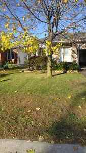 Lawn care and leaf removal Kingston Kingston Area image 1