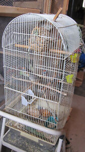Zebra Finches with Tall Cage