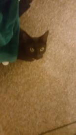 Lovely black cat