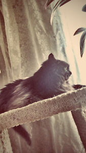 Middle aged female cat to forever home London Ontario image 1