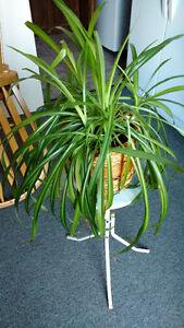plante d'intérieur \ interior plant
