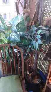 Out door home decorative plants/pottery Cambridge Kitchener Area image 1