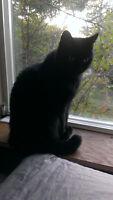 Male black cat