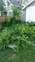 Tree cutting remove branches junk same day service