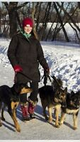 Dog Walker Looking for Clients - 2nd walk free!