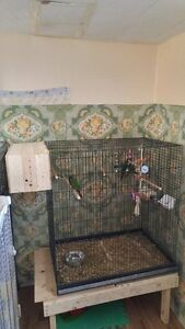 cage pour oiseaux ( oiseux exclus de la vente )