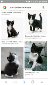 Looking for a Kitten!