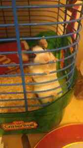 Mice for sale as pets