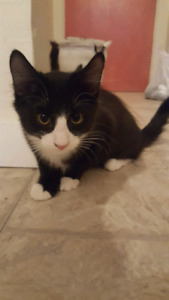 FREE Kitten and 1 year old available for adoption