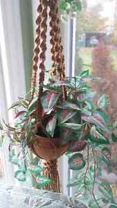 Hanging silk plants with hanger and pots Kingston Kingston Area image 2