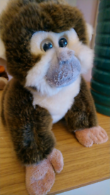 Monkey cuddley toy. 🐵🐵🐵🐵🐵🐵🐵🐵🐵❇️🐒🐒🐒🐒❇️❇️❇️❇️✳️✳️✳️✳️✳️✳️✳️