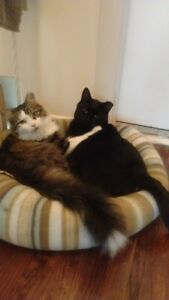 The Dynamic duo...Two bonded male cats seeking a home (free)