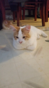 6 month old kitten looking for a loving home