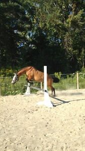 Horses Available for Coboarding Cambridge Kitchener Area image 5