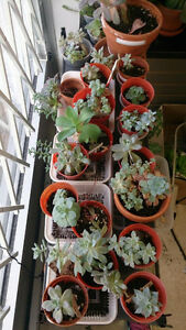 FREE! Succulent plants for free!!!