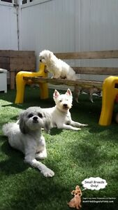 *FULL FOR HOLIDAYS* NEED TO GO AWAY? HAVE A SMALL FRIENDLY DOG? West Island Greater Montréal image 3