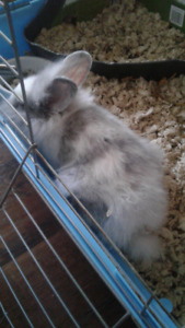 MALE BUNNY NEEDS NEW HOME! NEED GONE ASAP!