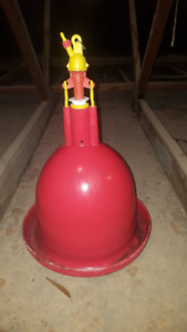 Automatic poultry waterer,