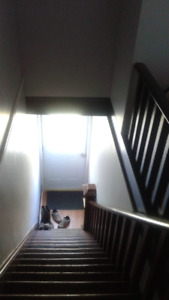 Nice one bedroom near Dalhousie available August 1