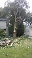Chippity Chop Tree Service