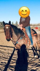 four year bay roan mare
