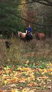 Actively looking for a part board or lease for my 2 mares Peterborough Peterborough Area image 2
