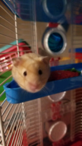 Hamster with house, food and accessories