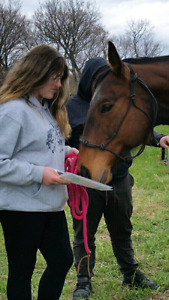 Equine First Aid Courses.