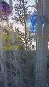 Filet lace design curtains Kingston Kingston Area image 8