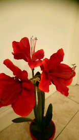 Artificial plant with red flowers 61 cm height
