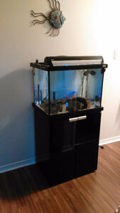 Fluval studio 600 full fish tank setup