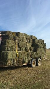 Prime second cut hay bales. Covered