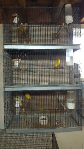 Canary & Cages for SALE !!!