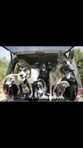 TAILS ON TRAILS-GROUP DOG WALKS-16.00-2hrs off leash