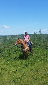quarter horse mare well broke to ride.