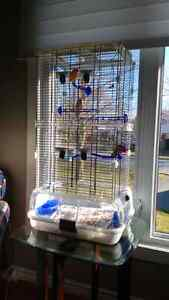 Sold - Male singing canary and large cage