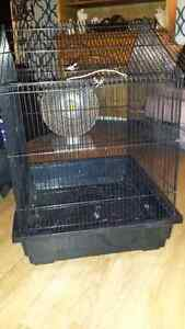 Cage oiseaux adopt or rehome pets in gatineau kijiji classifieds for Cages a oiseaux decoratives