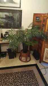 Artificial Palm Tree and Rattan Stand