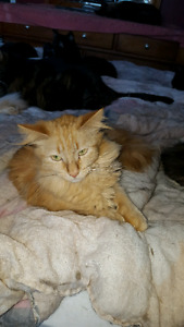 Re homing and donations needed for cats