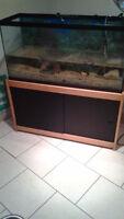 Aquarium avec accessoires, meuble et poisson chat