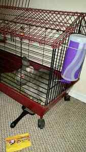 Rabbit To Good Home London Ontario image 2