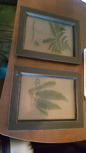 2 clear pictures of decorative leaves