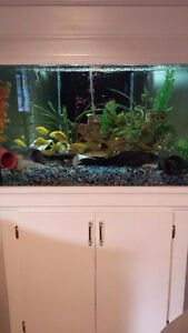 Aquarium and Fish for Sale Windsor Region Ontario image 2