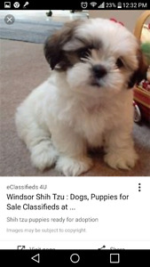 Looking for a free puppy