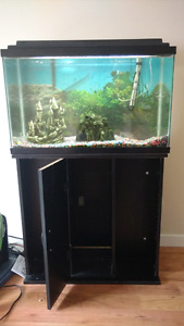 Complete 20 Gal tank, fish and accessories.